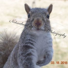 Adorable Squirrel - Ebay