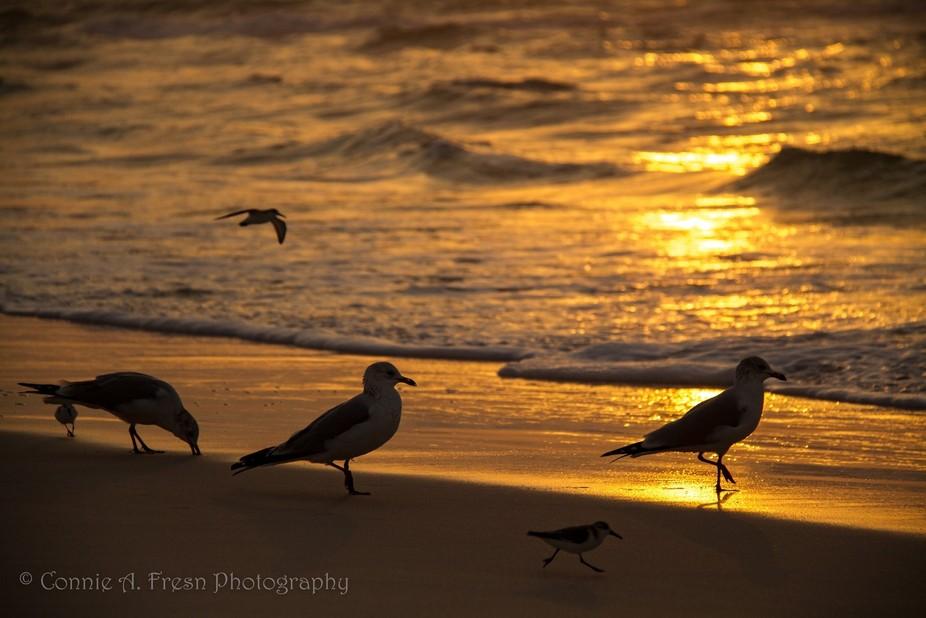 Seabirds at Sunrise
