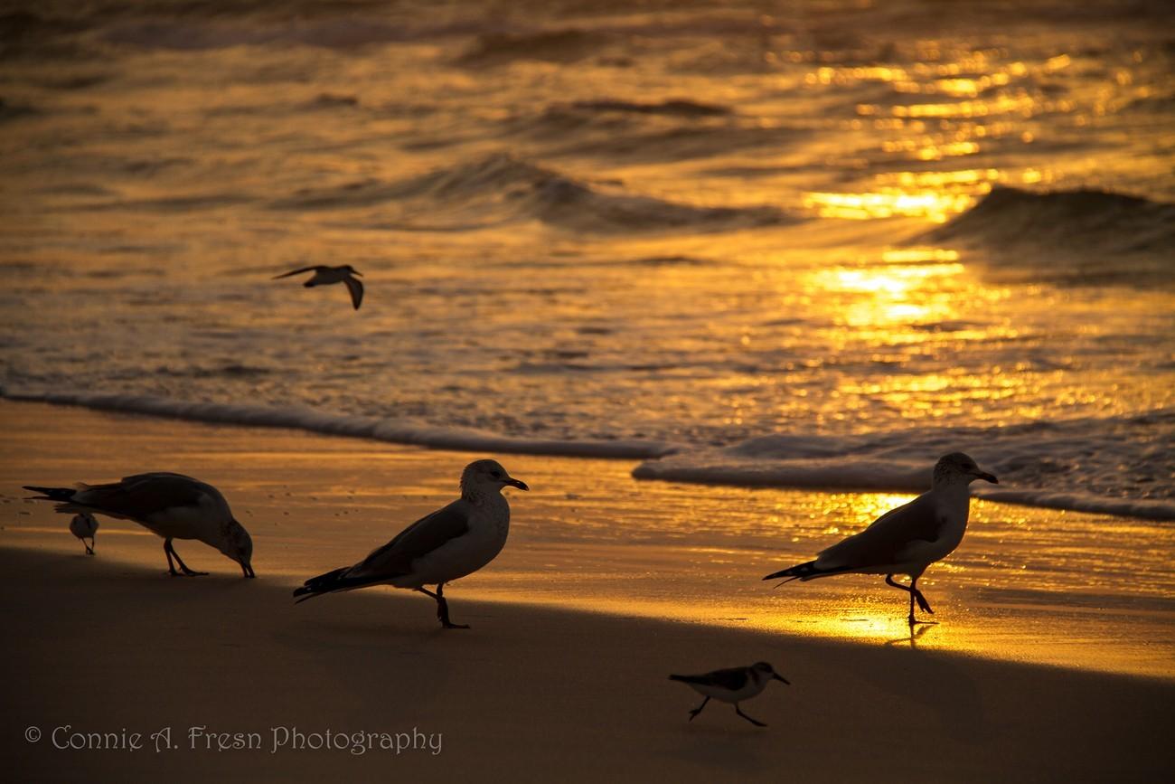 Seabirds at Sunrise