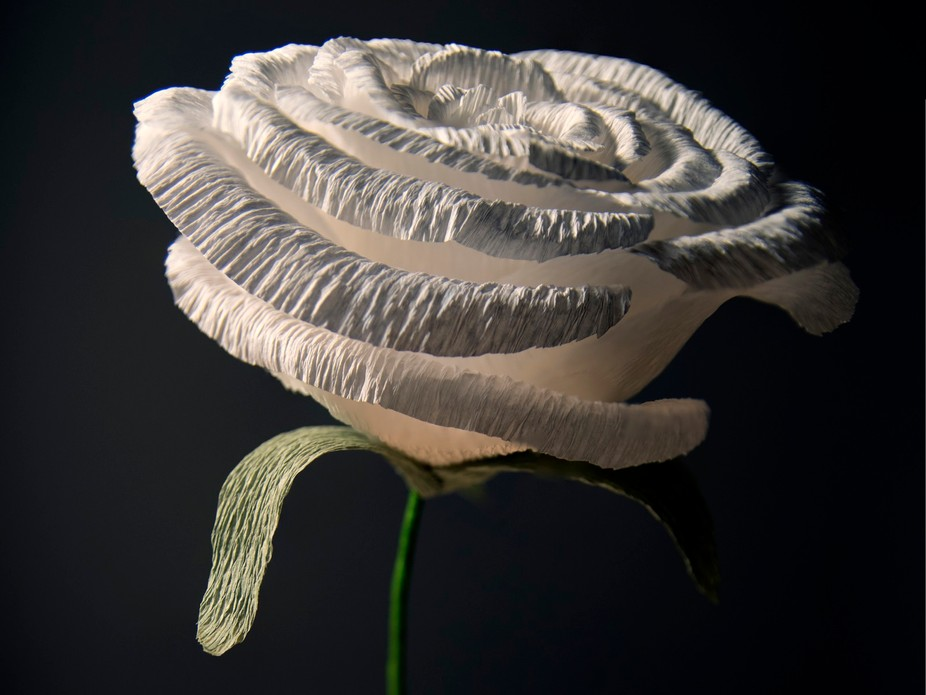 A friend of mine creates paper flowers which look incredibly realistic!