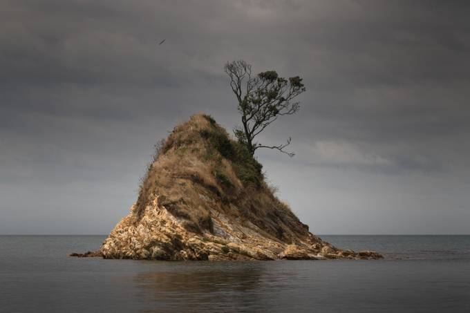 Bryants Bay Island by johngregory - A Lonely Tree Photo Contest