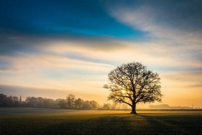 Frosty Oak Tree