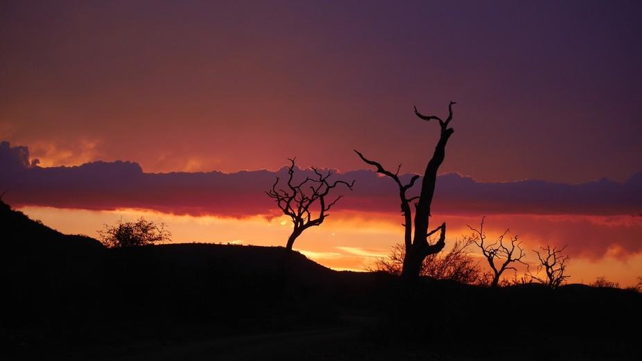 Taken in Madikwe Game Reserve South Africa
