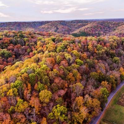 Franklin Tenneessee Fall Colors