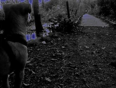 AILIA, EVENING WALK