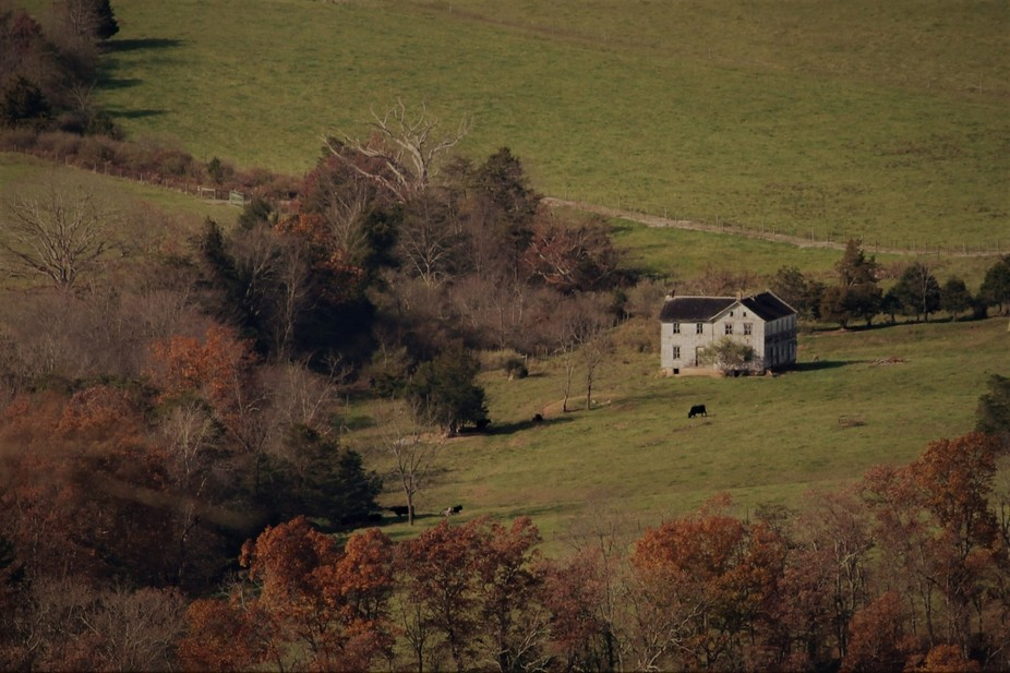 Abandoned valley farm house within cow pasture.