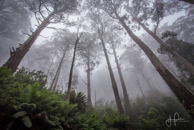 41+ Incredible Shots Of Tall Trees That Will Impress You
