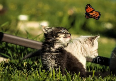 Butterfly can I catch you and keep you .