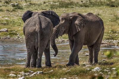 Etosha Elephant 2