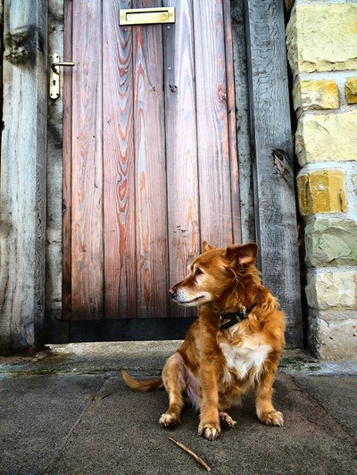 The Wooden Door And The Dog