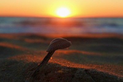 Sunrise on a Shell