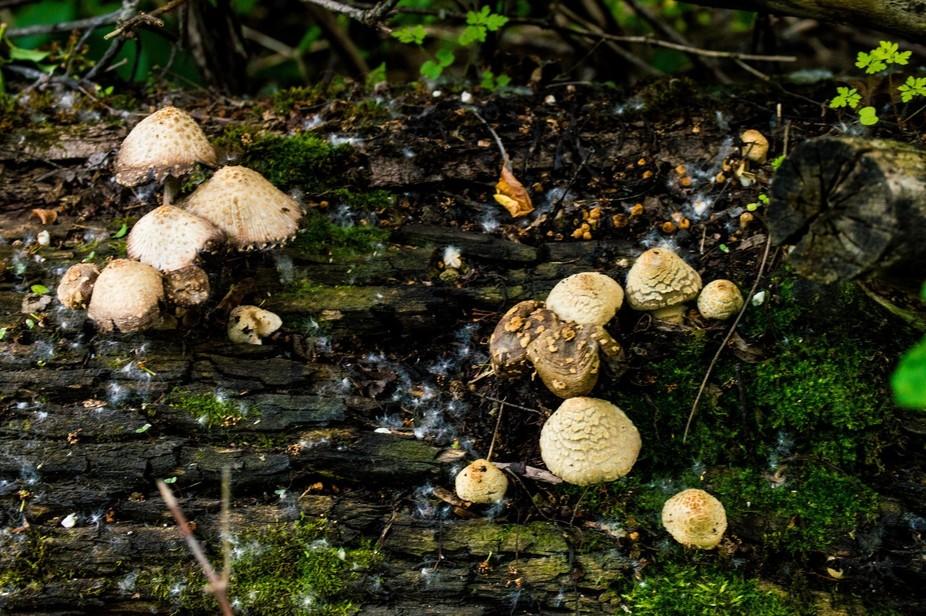 Mushrooms-6