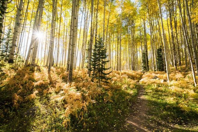 Colorado Fall Forest by jasonjhatfield - Fall 2017 Photo Contest