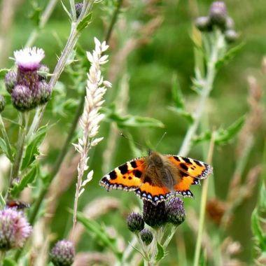 Butterfly  Sunbathing ............ soon I hope