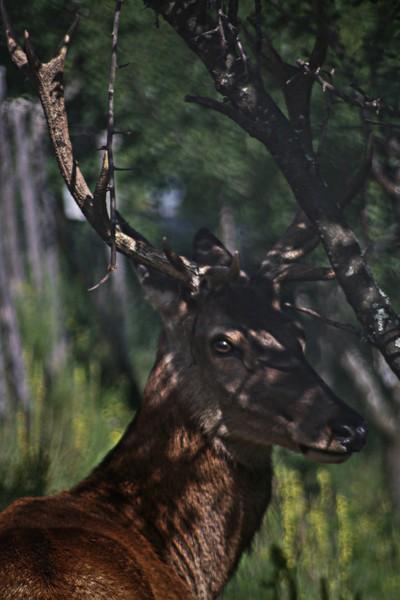 A deer is watchin' you