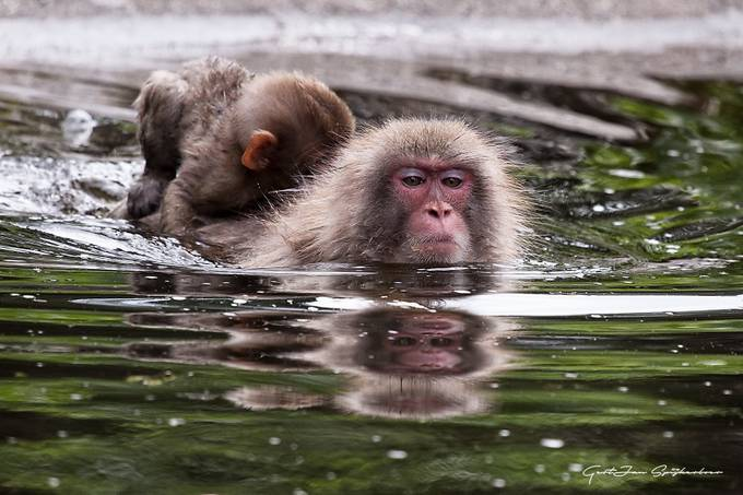 by Spijkerboer - Animals And Water Photo Contest