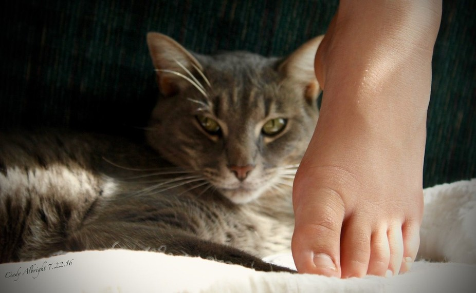 """Our cat named """"Lucky"""", secretly stalking my Granddaughter's foot."""