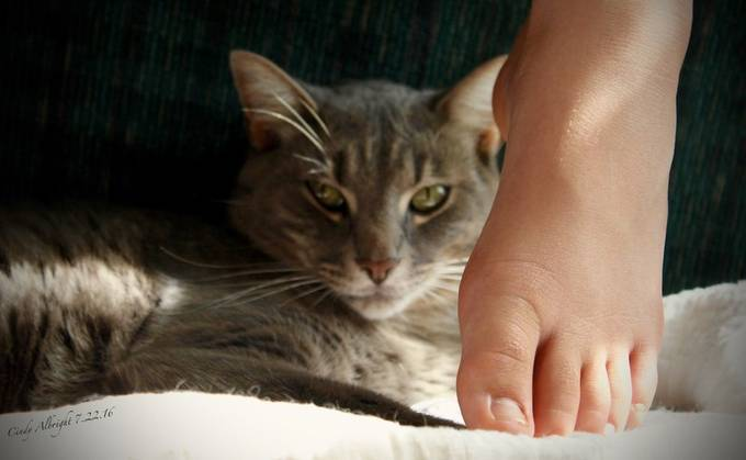"Our cat named ""Lucky"", secretly stalking my Granddaughter's foot."