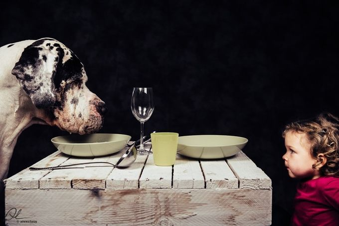 New Year's Eve Dinner by alessandropo - Only Pets Photo Contest
