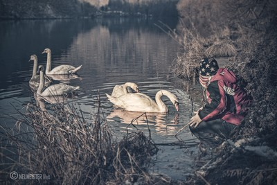 Swan shepherd