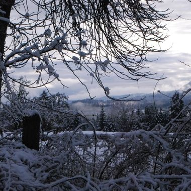 Winter Wonderland off Allsbrook, Parksville, Vancouver Island -  Dec 12, 2016