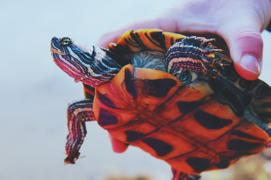a turtle we rescued last winter