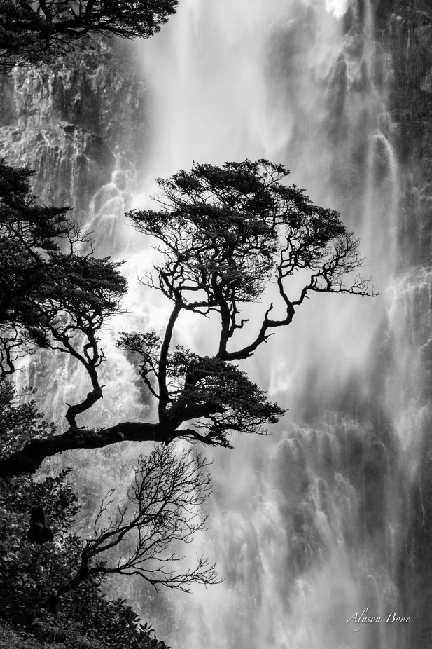 Punchbowl Tree AB_058A1555 by AlyBone - Tree Silhouettes Photo Contest