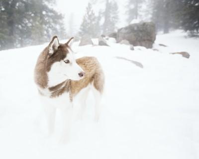 Koda In Snow