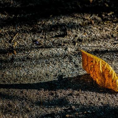 Shadows of an Autumn Leaf