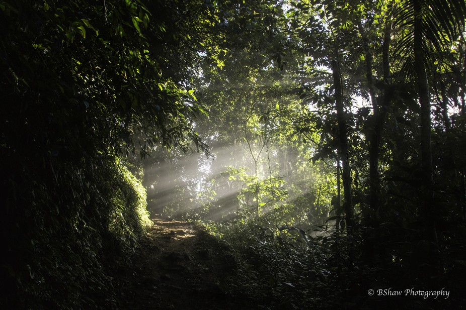 The first morning rays of light coming through trees along the hike from Cuidad Perdida in Colomb...