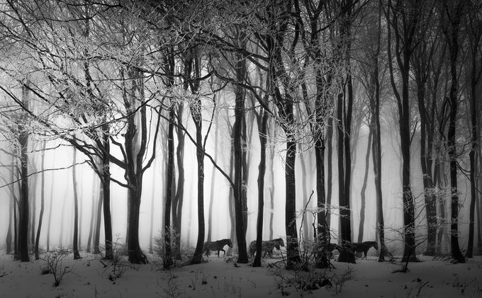 Winter forest by swqaz - Winter In Black And White Photo Contest