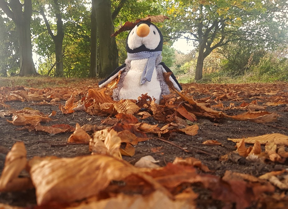 My partner bought me a penguin (teddy) on a recent trip to York, after a lot of cooing through th...