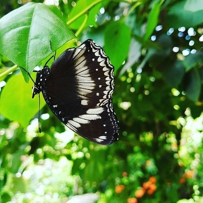 Butterfly world #photography #butterfly #happy #life #nature #travel #holid