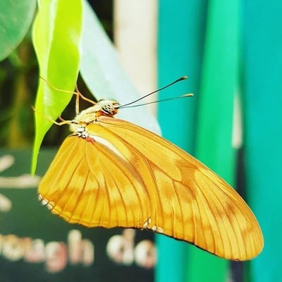 Butterfly world#photography #butterfly #happy #life #nature #travel #holid