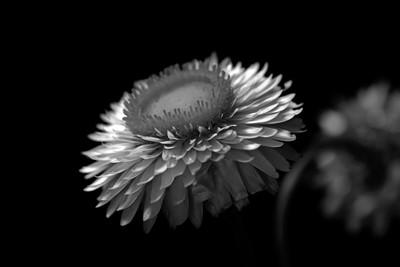 Floral Dream 0918 Black and White Viewbug