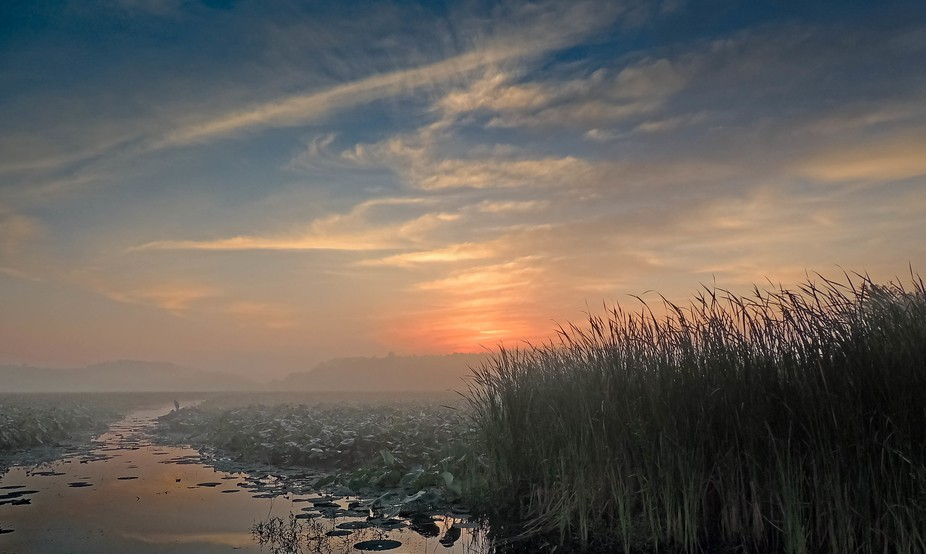 Sunrise through the fog over the wetlands
