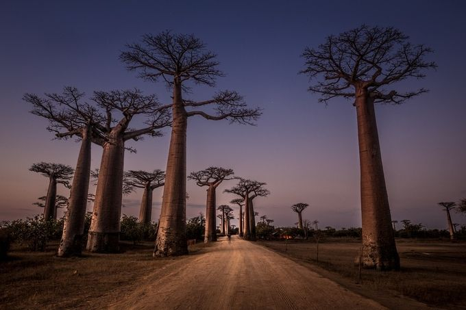 Allees des baobabs by Marco_Tagliarino - Explore Africa Photo Contest