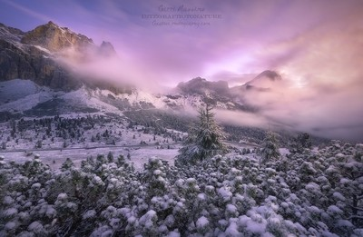 © Embraced by the first snow
