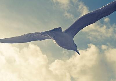 Brighton Seagull