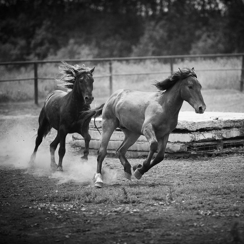 IMG_1803_1-2 by fotki54 - Dusty Photo Contest