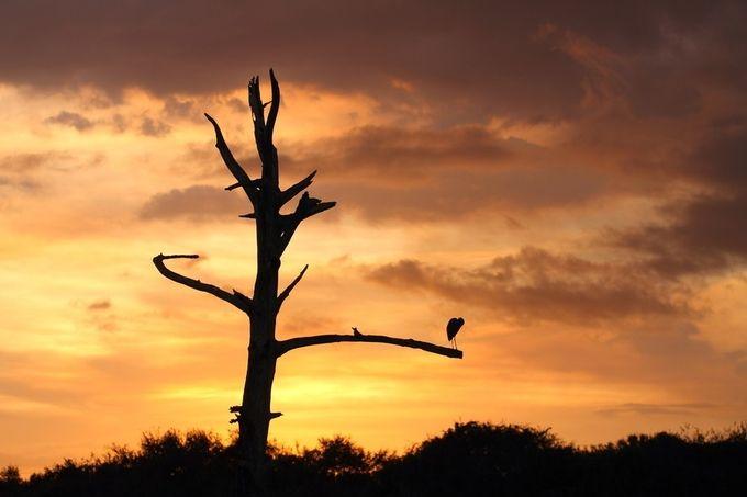 Wetlands Sunset (2)