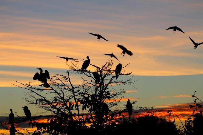 Wetlands Sunset