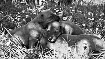 Spring puppies