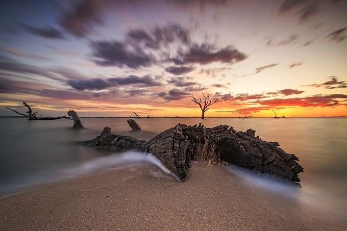 Aequinoctium by kirstymorrell - Fallen Trees Photo Contest