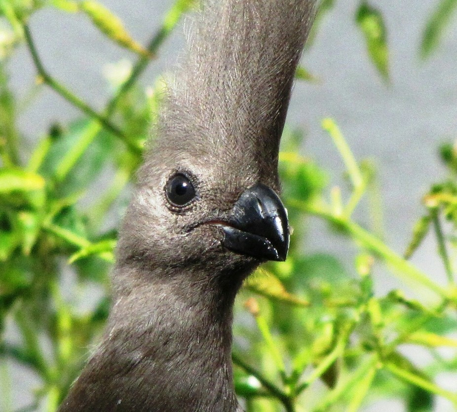 Wild birds moving into suburban area