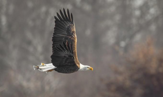 Freedom  by kellymarquardt - Shallow Depth Of Field Photo Contest