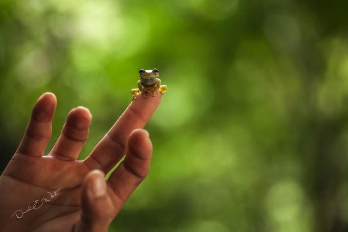 Amazon Tiny by wild-west - Small Wildlife Photo Contest