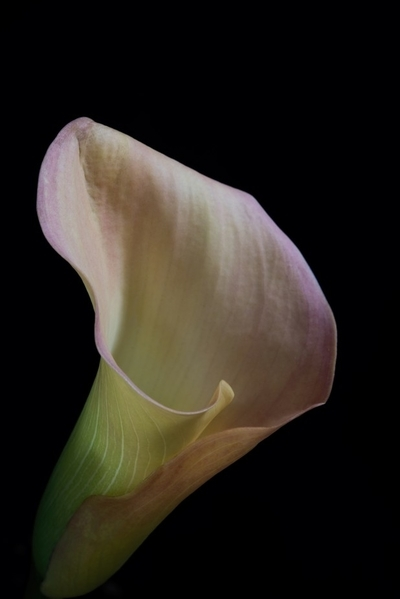 Floral Patience 0405