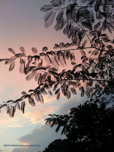 2 Aug 2014-sunset