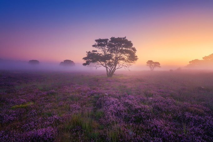 Mystery Morning by albertdros - Tree Silhouettes Photo Contest